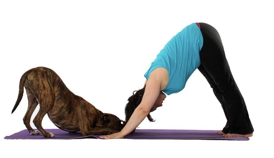 Yoga - Dog + human in down dog