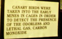 Canary in Coal Mine - Statement
